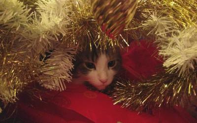 CAT heeft kerstvakantie